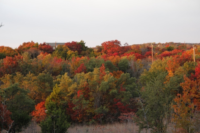 "Fall Foliage Could Be ""Spectacular,"" Expert Says"