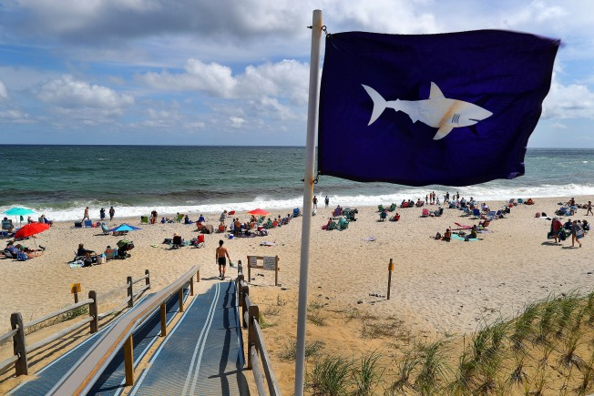 Cape Cod Beach Temporarily Closed to Swimmers After Shark