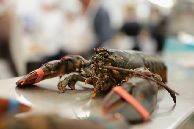 Hearings Planned to Discuss Saving Southern New England Lobsters