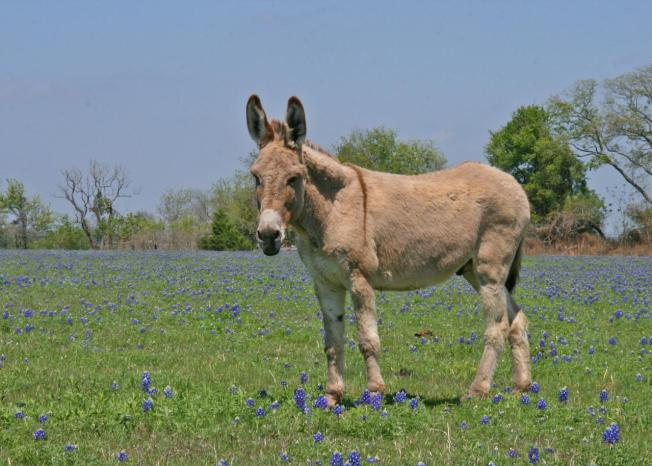 State Seizes Horses, Donkey, Llama and More
