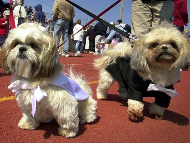 Largest Dog Wedding Ever!