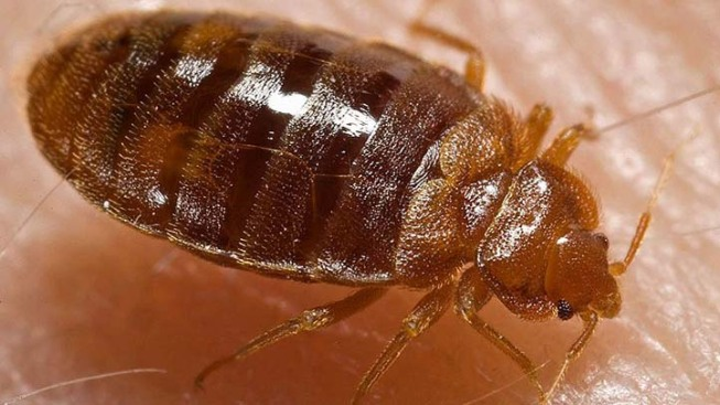 Lawmakers Consider Bedbug Bill