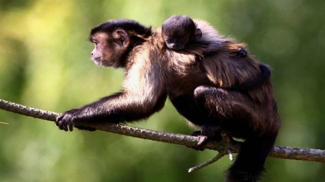 Monkeys Have Regrets Too