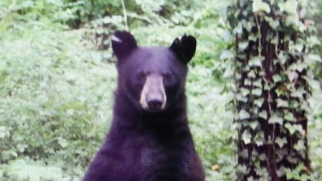 Dog Killed in Bear Attack in Bloomfield