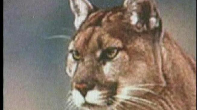 Group Hopes to Prove Mountain Lions Live in CT