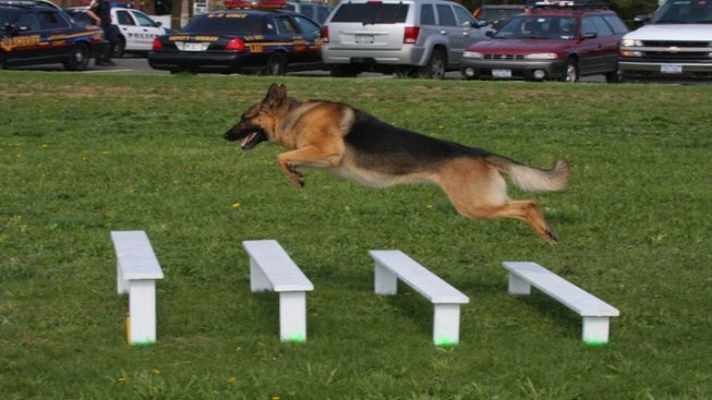 K9s to Compete in Milford