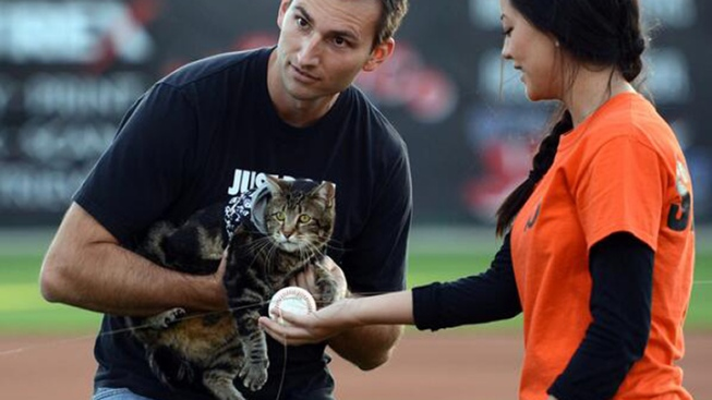 "Hero Cat ""Throws"" First Pitch at Baseball Game"