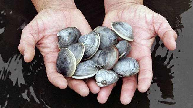 Shellfish Bacteria Can Cause Flu-Like Sickness