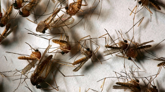 West Nile Virus Found in East Haven