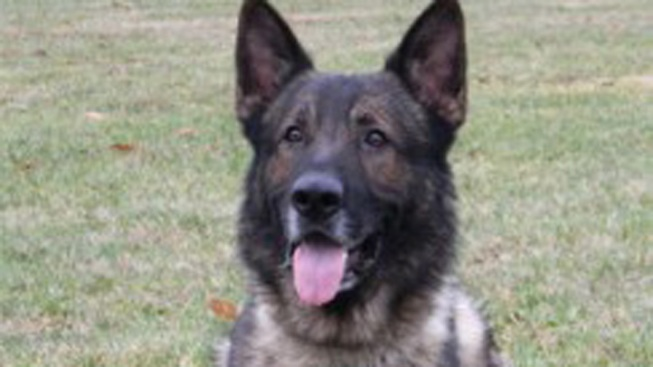 Police Dog Dies During Training