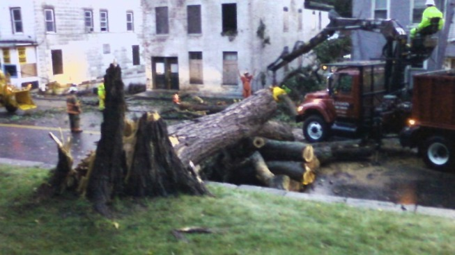 Tree Trouble in Norwich