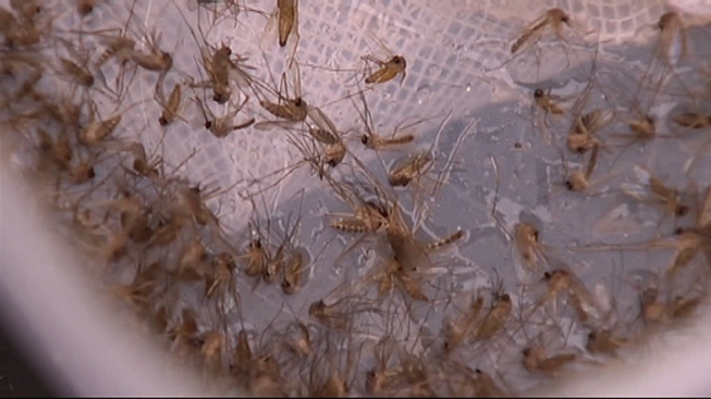 First Human Case of West Nile This Season