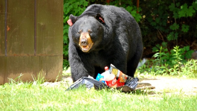 Bear Breaks Into Man's Home, Takes Food