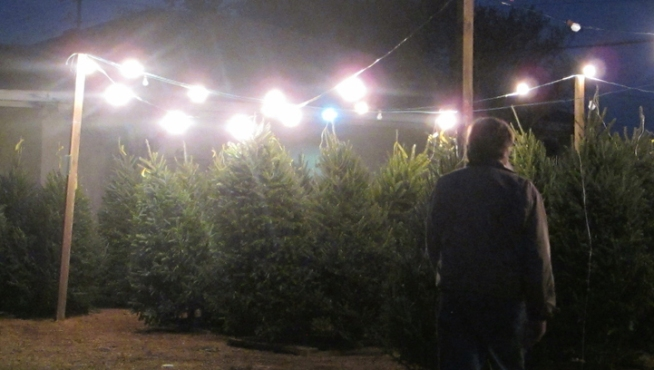Free Christmas Trees at Home Depot