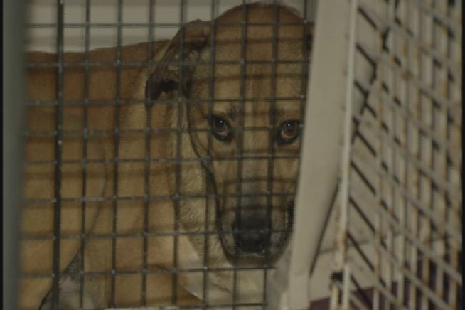 Animal Control tells NBC Connecticut, 65 dogs were seized from the SPCA of Bethlehem because the facility that houses them has no heat.