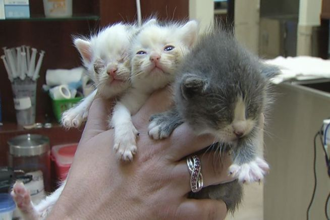 Abandoned Kittens Left In Hartford Neighborhood