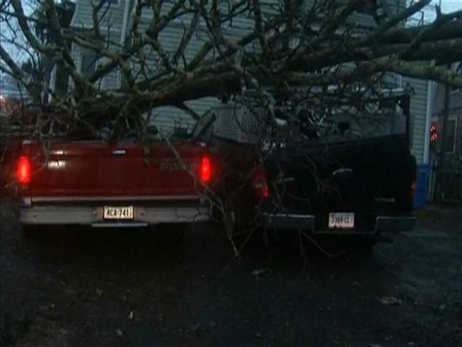 Residents of apartments on Fern Street in Hartford woke to find a tree had fallen on cars.