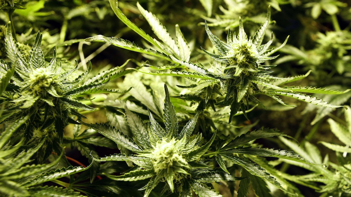 By a slight margin, most Connecticut voters support allowing adults to legally possess small amounts of marijuana for personal use, according to poll released on Monday. Most of that support came from residents who are between the ages of 18 and 29.