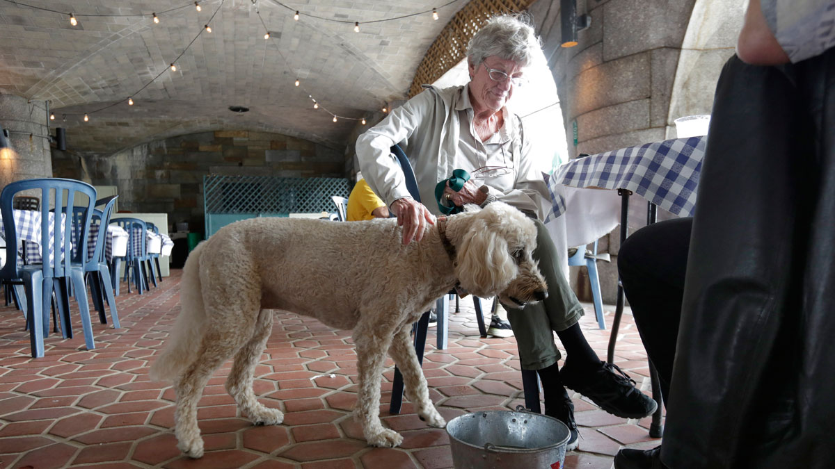 Fido is seeking a place at the outdoor dining table, or at least under it. And in some major cities and states, that's OK under the law.