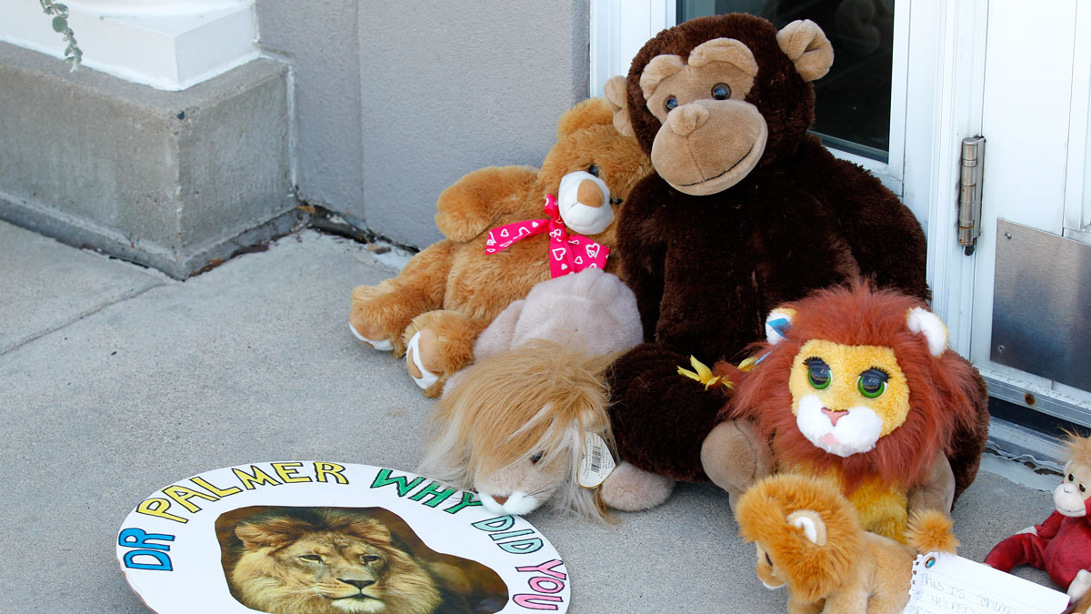 Stuffed animals and notes collect outside Dr. Walter James Palmer's dental office in Bloomington, Minn., Wednesday, July 29, 2015. Palmer reportedly paid $50,000 to track and kill Cecil, a black-maned lion, just outside Hwange National Park in Zimbabwe.