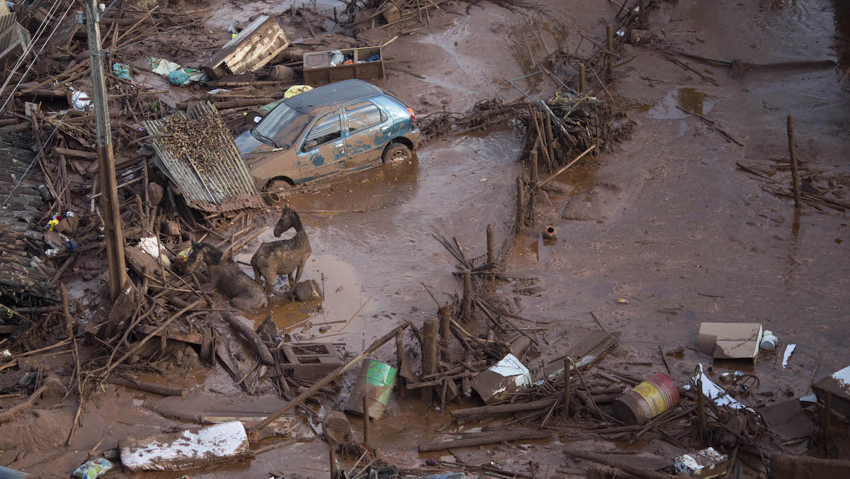 Horses struggles in the mud at the small town of Bento Rodrigues after a dam burst in Minas Gerais state, Brazil, Friday, Nov. 6, 2015.  Brazilian rescuers searched feverishly Friday for possible survivors after two dams burst at an iron ore mine in a southeastern mountainous area.