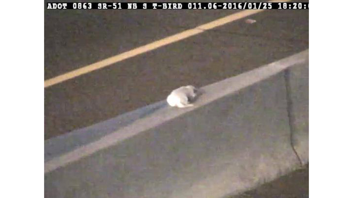 This puppy, now named Dottie, was stranded in the middle of a busy Phoenix highway at rush hour on Monday.