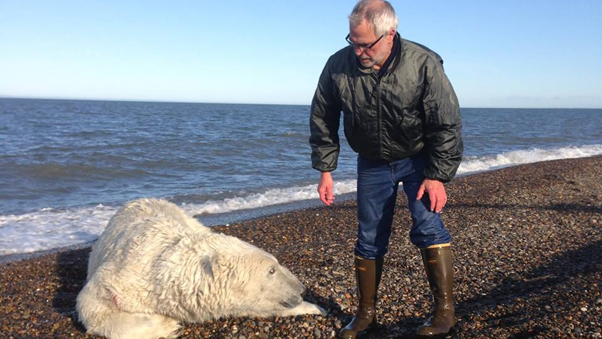 A 1,000-pound. polar bear was saved from a fishing net in Alaska on Sept. 7, 2015.