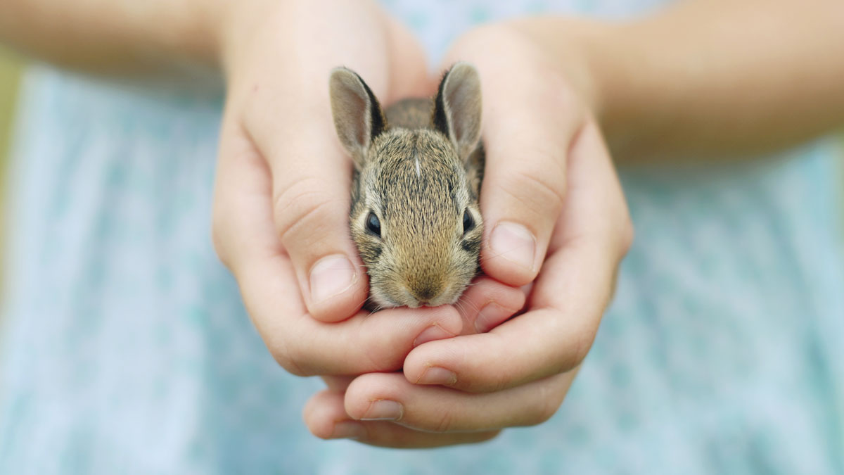 A young girl holds a small bunny in her hands. Thousands of rabbits are available for adoption through PetFinder.com, so hop to it!
