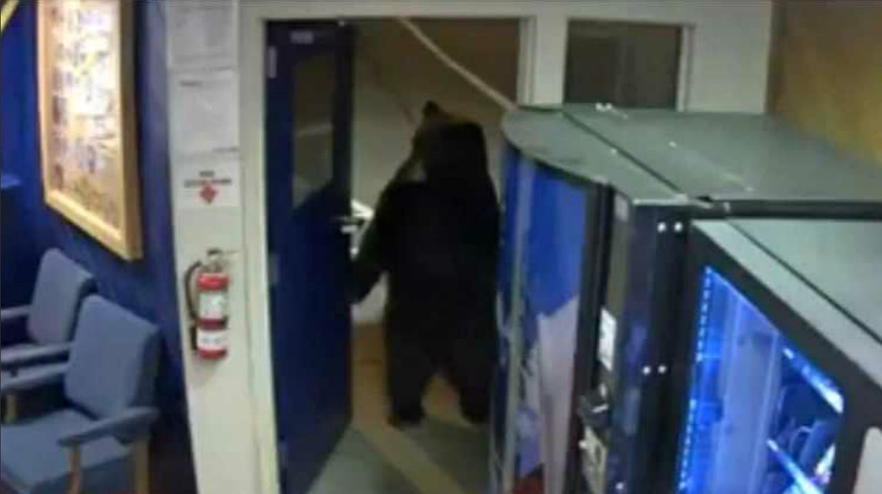 A bear opens a door and strolls into a CHP facility in Truckee. (Nov. 17, 2018)