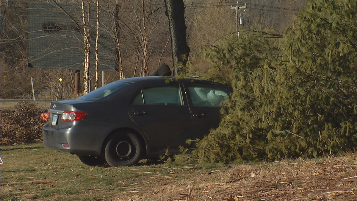A car struck a tree on Route 4 in Farmington Friday morning, causing the tree to topple over onto the vehicle.