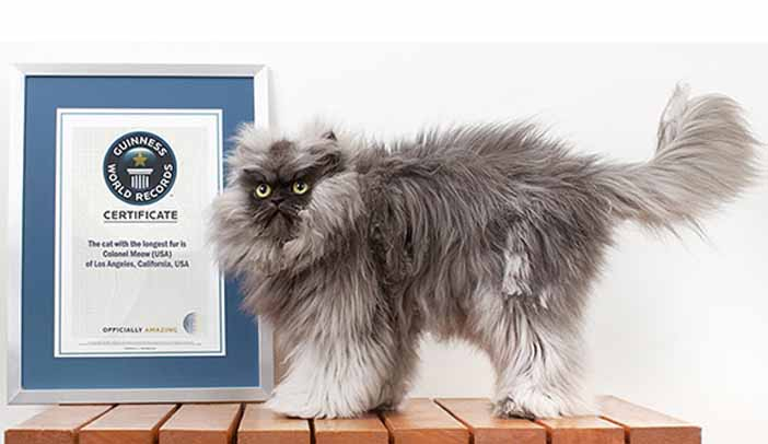 Guinness World Records, the global authority on record-breaking achievement, today revealed a sneak preview of the upcoming edition of the world's best-selling copyright book, by announcing its latest record-breaker: Colonel Meow, the Cat with the longest fur.