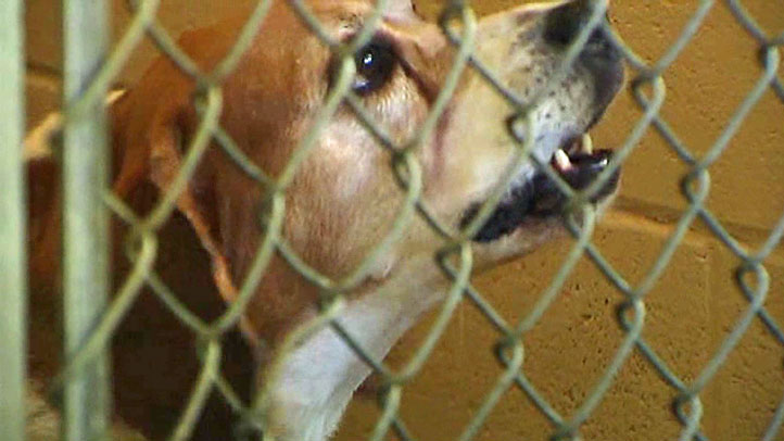 Keller puts dog adoptions on hold after two animals tested positive for canine parvovirus.