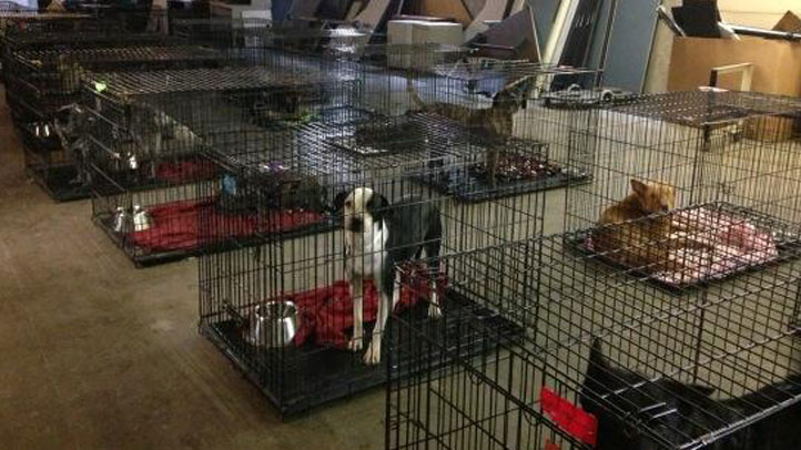 Hundreds of dogs are rescued in Denton County from an apparent case of animal neglect. They were sized from a home near Celina, operating as the Animal Guardians of America.