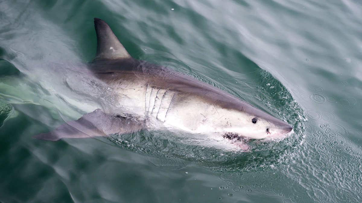 A 10-year-old boy was bitten by a shark at Daytona Beach Shores in Florida Wednesday afternoon.