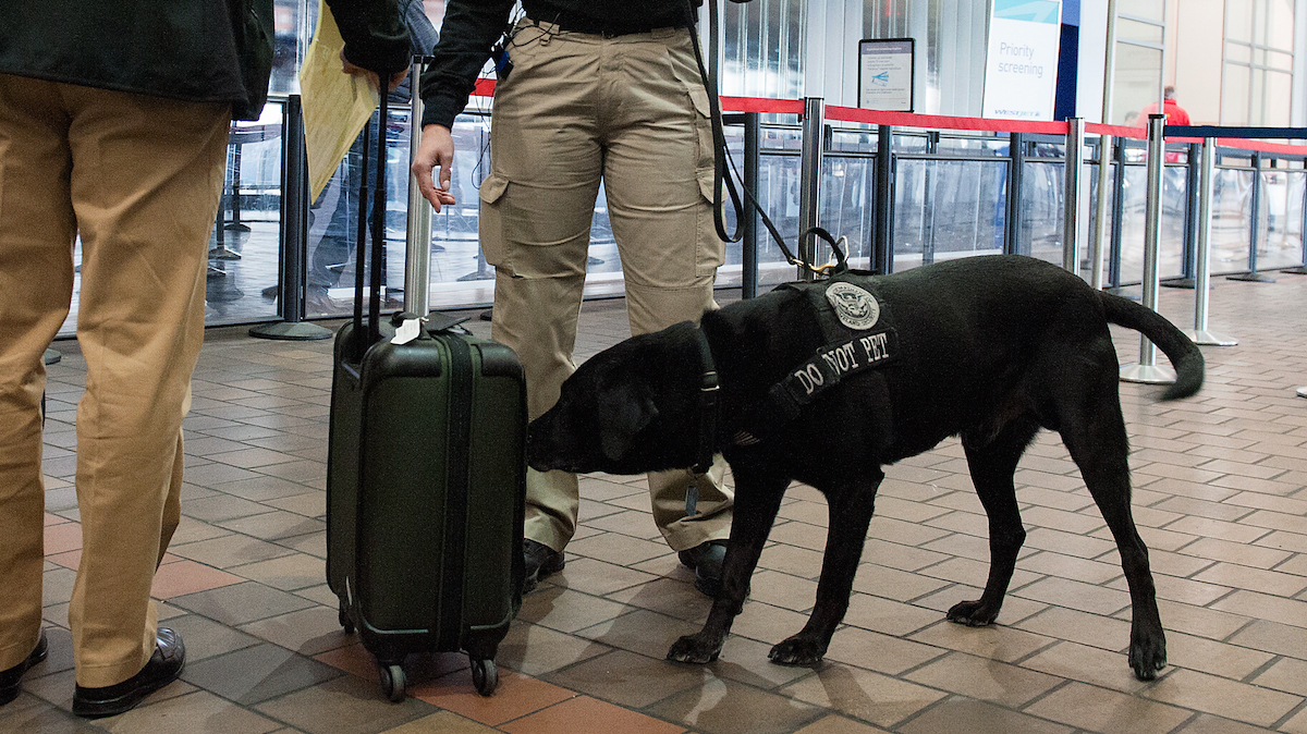 In this file photo, Transportation Security Administration K9 handler Melissa Ramos and her explosive detection dog Willie perform a demonstration at LaGuardia Airport on January 20, 2016 in the Queens Borough of New York City.