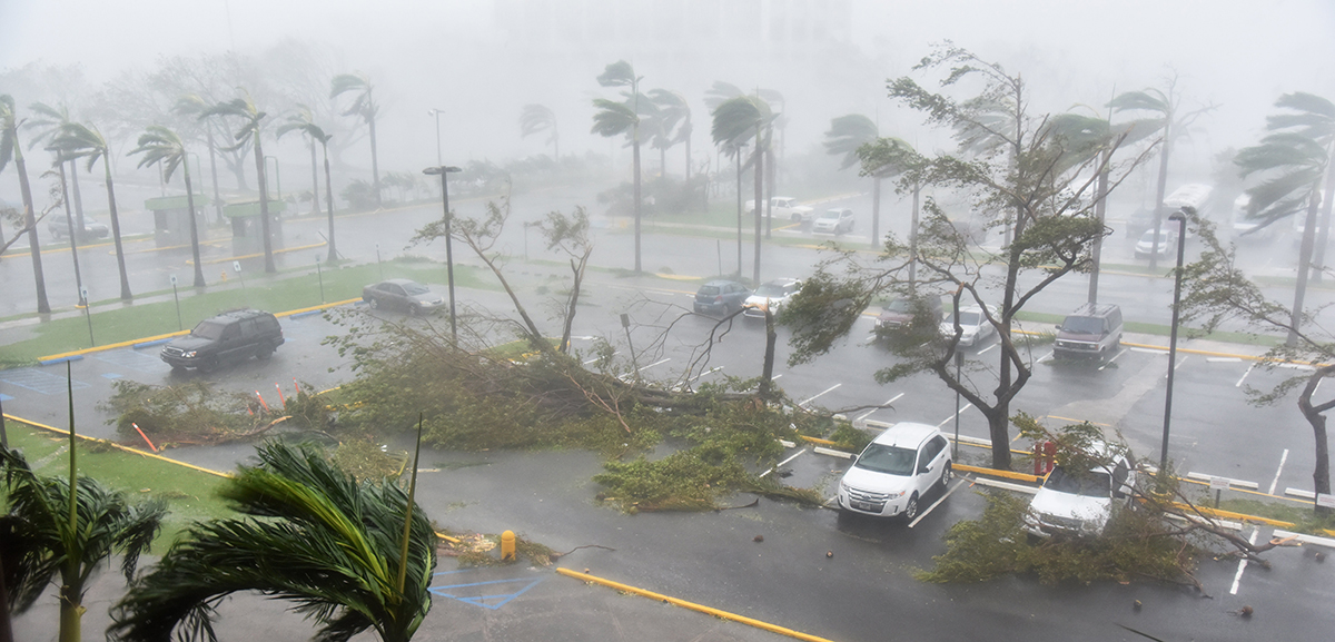 Trees are toppled in a parking lot at Roberto Clemente Coliseum in San Juan, Puerto Rico, on Sept. 20, 2017, during the passage of Hurricane Maria. Maria made landfall on Puerto Rico early Wednesday morning, pummeling the US territory after already killing at least two people on its passage through the Caribbean.