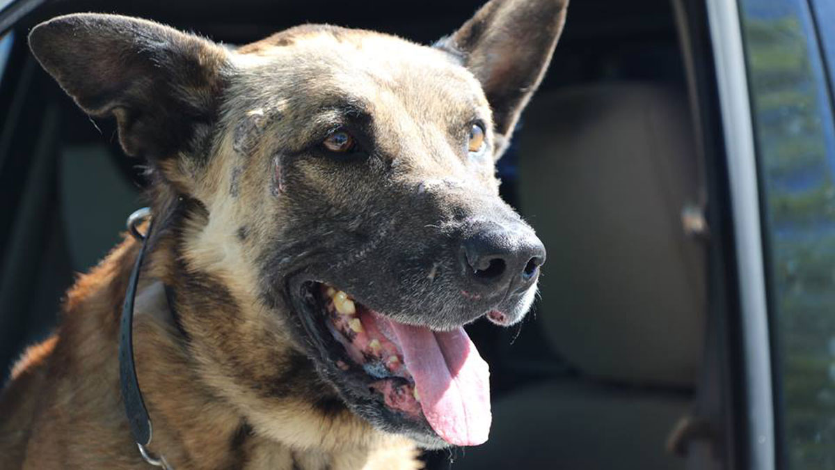 Las Vegas Police K-9 Nicky was killed while apprehending a double-murder suspect March 31, according to the police department.
