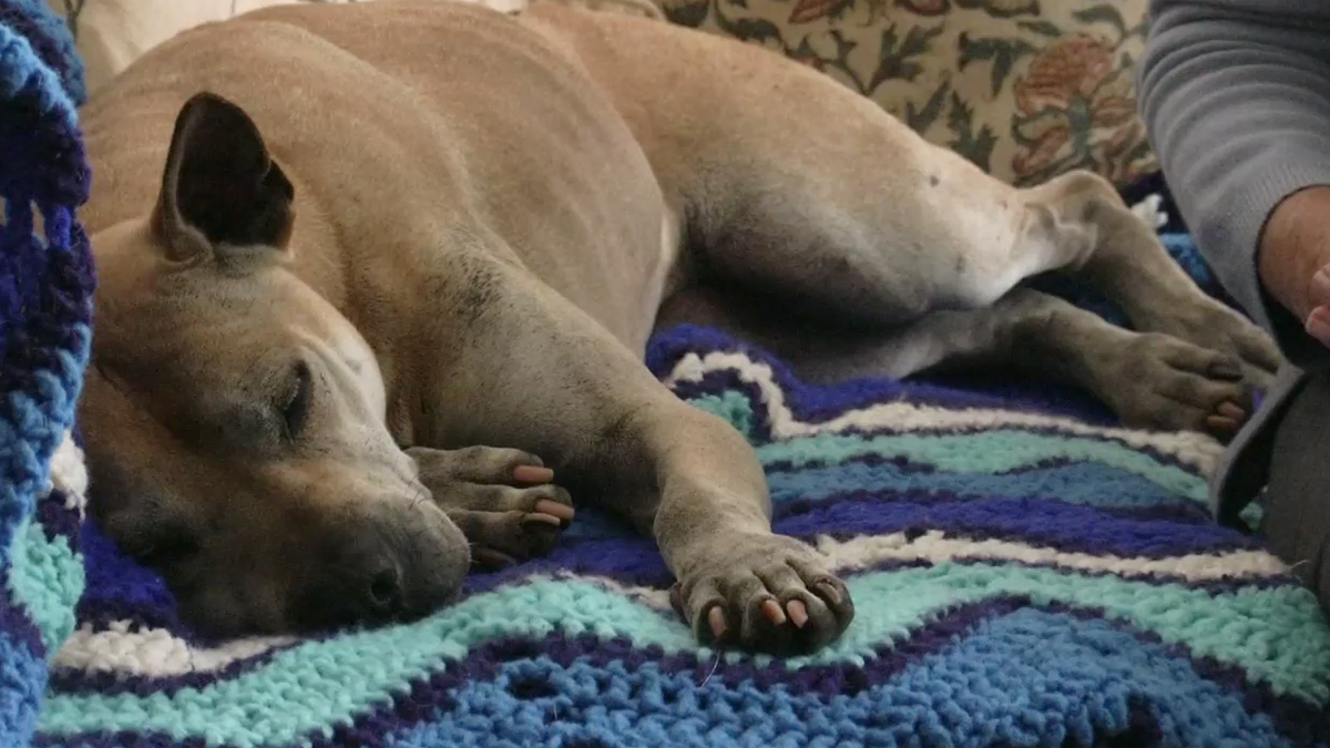 Georgia May has been resting comfortably since finding her way home after trekking more than 35 miles. She ran off and got lost during a hike at Penasquitos Canyon Preserve in San Diego on June 27, 2015.