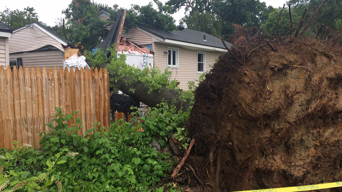 A massive tree was uprooted during a storm in Milford Thursday afternoon and came crashing down onto a home.