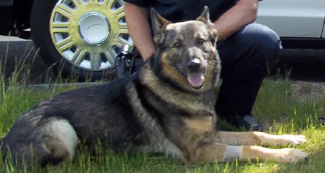 Maki, the Bloomfield police dog, has died due to an ongoing medical condition.