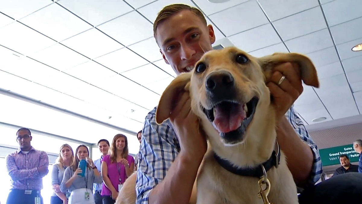 Marine Sgt. Sam Wettstein reunites with his military contract dog, Belle, in San Diego on Aug. 1, 2014. The pair served side-by-side in Afghanistan for seven months and have now been reunited.