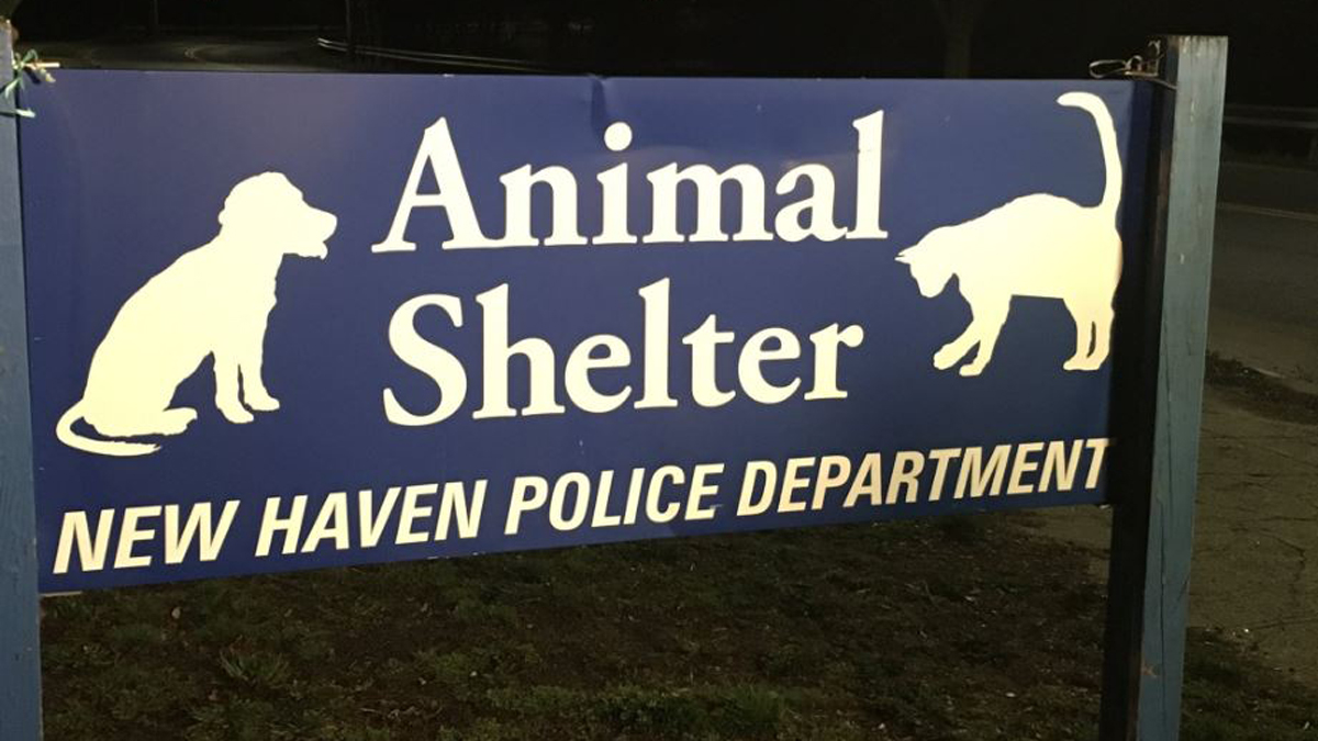 Friends of New Haven Animal Shelher