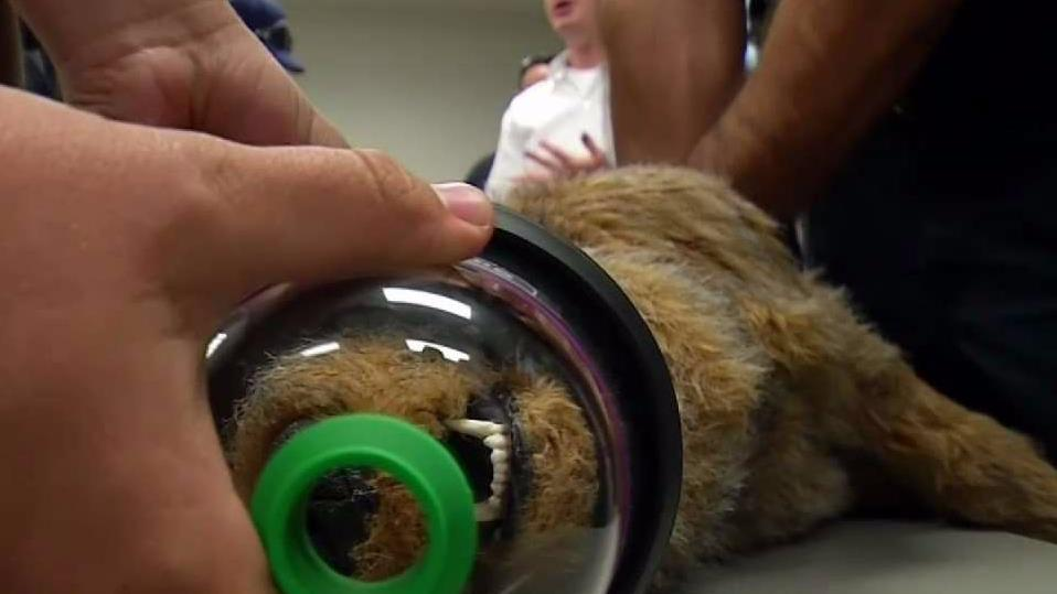 The masks could potentially save the lives of any animal caught in a fire.