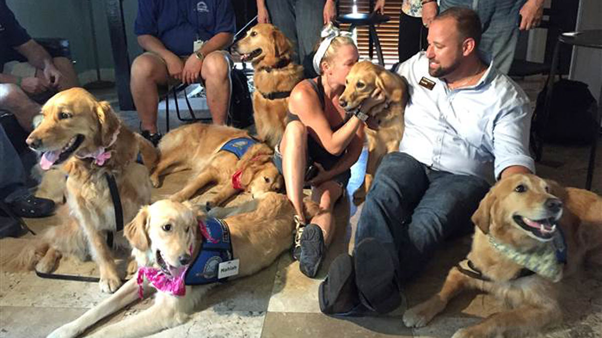 A dozen support dogs were flown to Orlando this week to help offer comfort to those affected by the mass shooting at Pulse nightclub on Sunday.