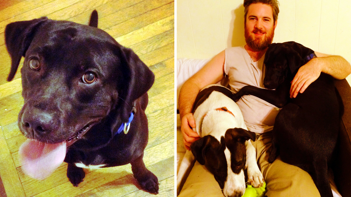 Phife, pictured left, and right, with owner Matthew Dublin and fellow pooch Buggy.