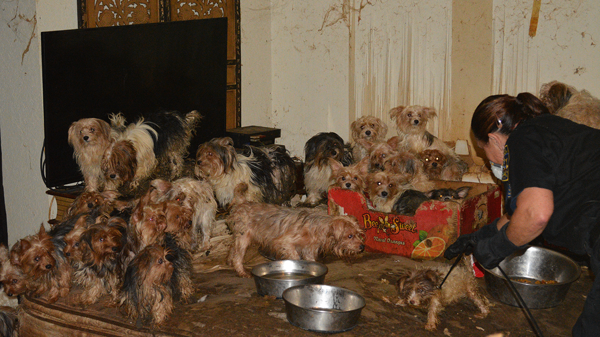 Some of the dogs that were rescued from the suspects' home in Poway, California.