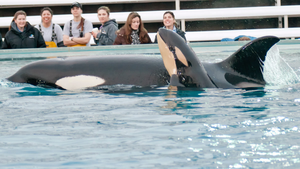 SeaWorld San Diego has theme park locations in Orlando, Florida, San Antonio, Texas and San Diego, Calif.