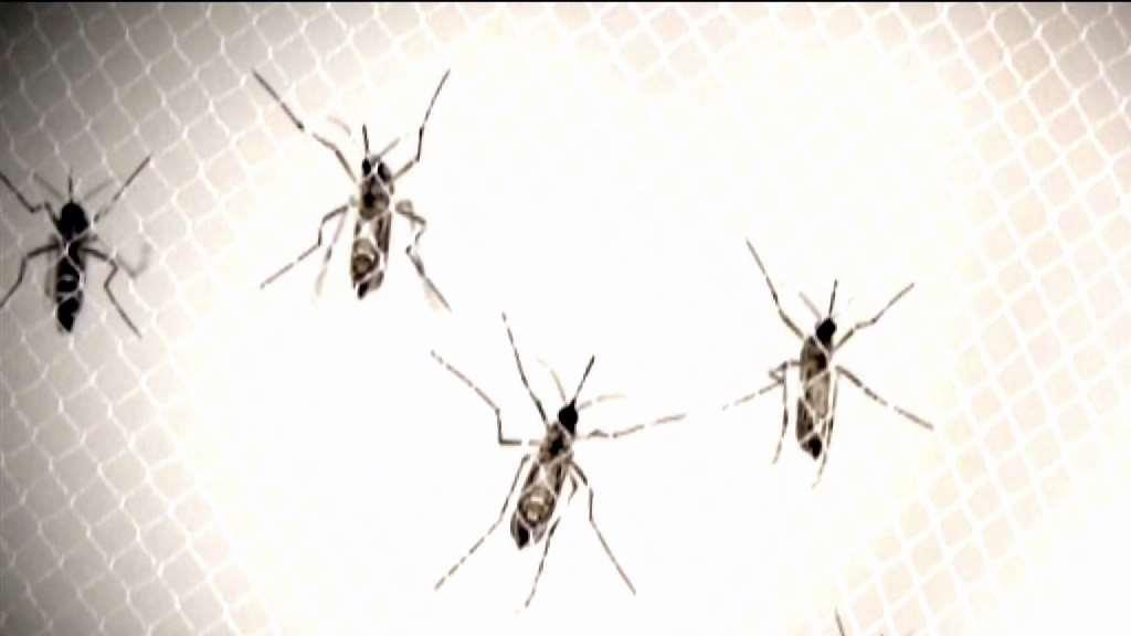 Mosquitoes With EEE, West Nile Virus Found in 25 Towns