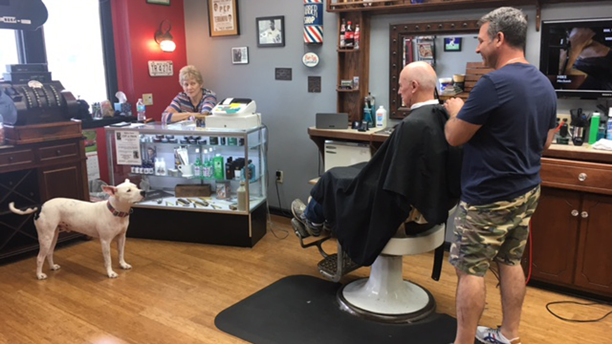 Teddy the barbershop dog is the star at Paulie's Professional Barber Shop in South Windsor.
