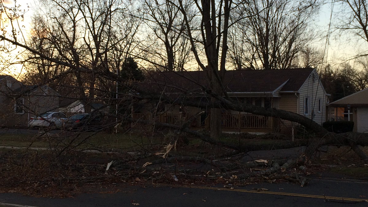 A tree came down on Halfway House Road in Windsor Locks Thursday morning due to high winds in the area.